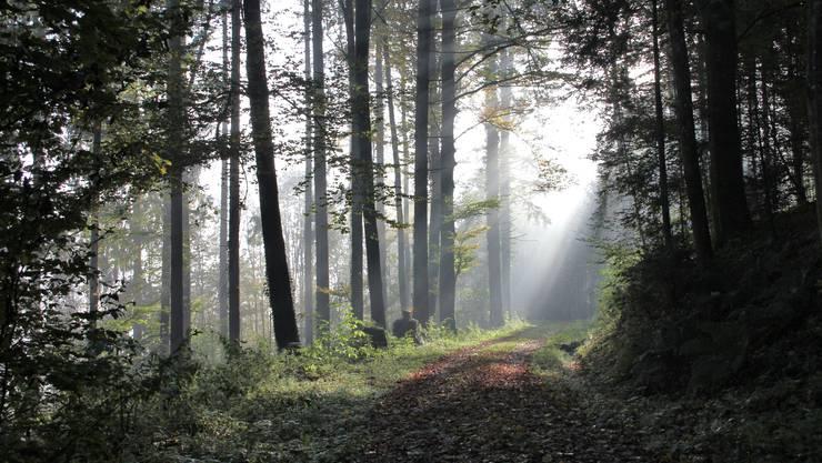 Herbstwald am Morgen