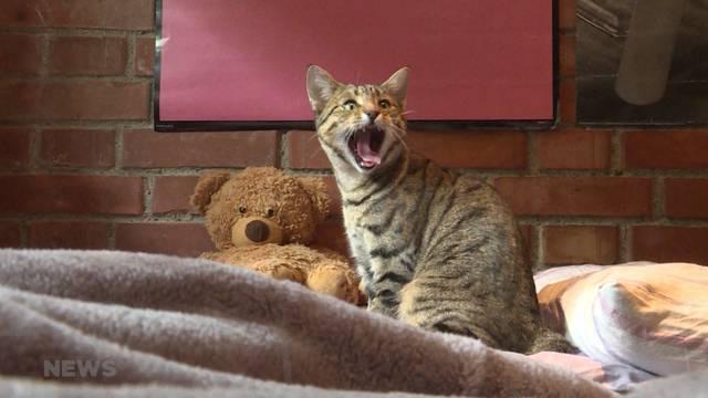 24-Jähriger rettet beinahe toter Katze das Leben