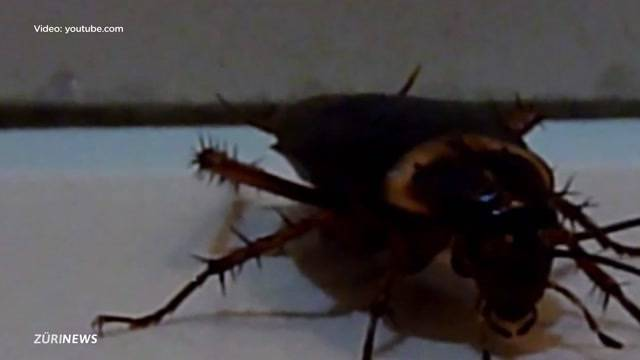 Kakerlaken-Alarm im Shop-Ville