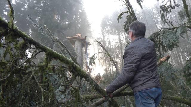 Wiederaufbau nach dem Sturmtief Burglind