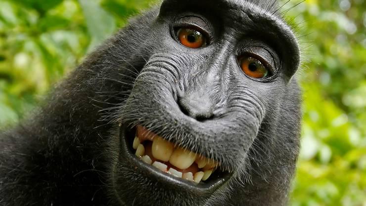 Naruko drückte zwar den Auslöser, aber ein Copyright fürs Selfie hat sie nicht. Weil sie Affe ist.