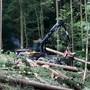 Im Forstgebiet mussten in den vergangenen Wochen insgesamt fast 60 Hektaren Wald mit akutem Käferbefall vorzeitig geräumt werden. (Archiv)