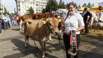 Die Viehschau am 8. Solothurner Chästag