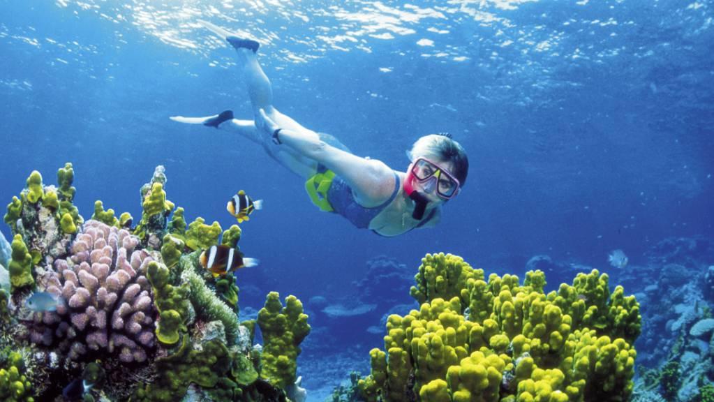 Das Great Barrier Reef an der Ostküste Australiens soll auf die Rote Liste der Unesco gesetzt werden. (Archivbild)