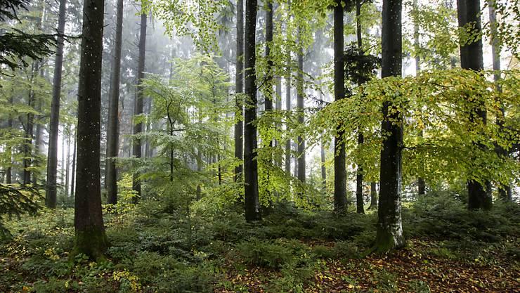 Gut für die Gesundheit: Ein Waldspaziergang senkt das Stresslevel. (Archivbild)