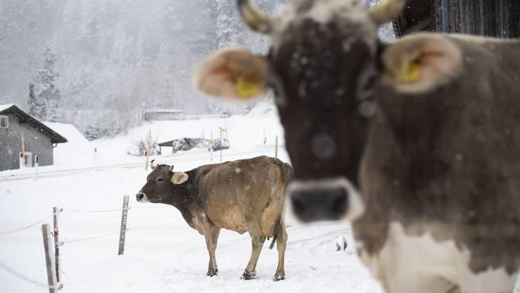 In der Schweiz ist 1990 der erste Fall von BSE aufgetreten.