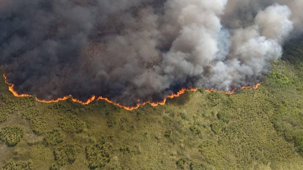 Feuer im Weltnaturerbe: Im mexikanischen Reservat Sian Ka'an auf der Halbinsel Yucatán sind seit einer Woche rund 2500 Hektar Feuchtsavanne von einem Brand betroffen.