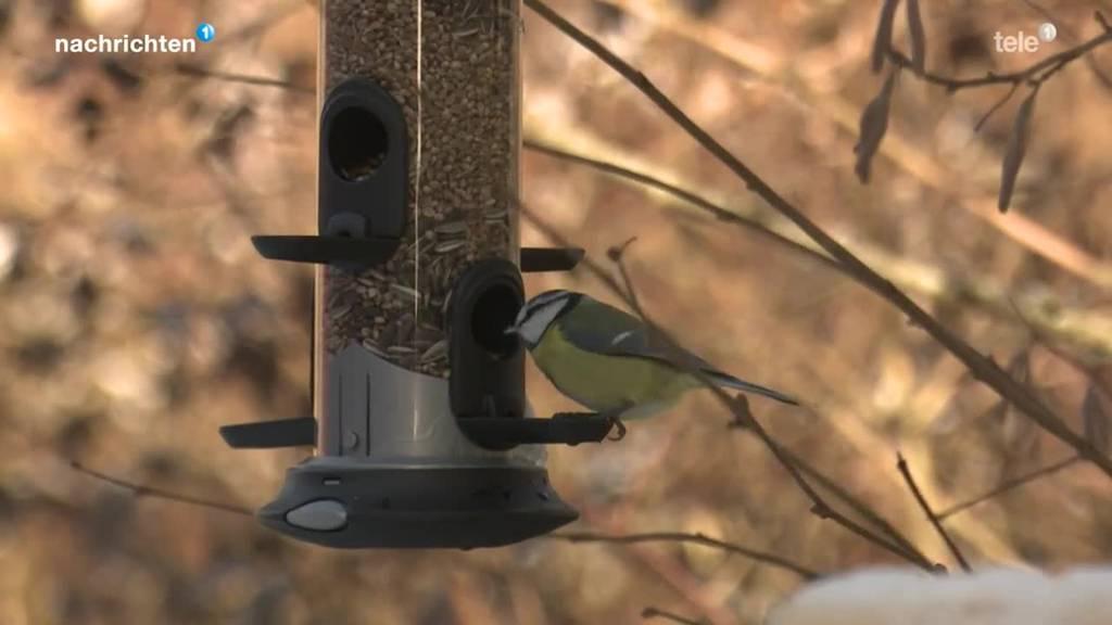 Richtig Vögel füttern