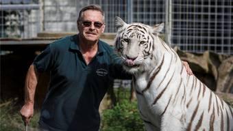 Drei Pumas und ein Tiger aus dem ehemaligen Raubtierpark von René Strickler in Subingen konnten bereits nach Crémines umziehen. (Archivbild)