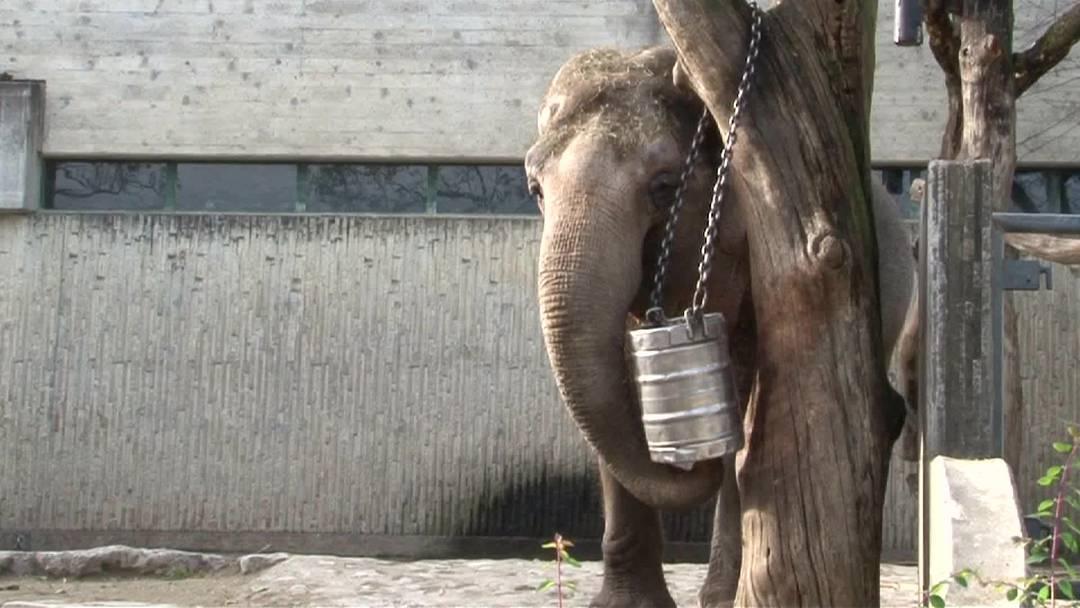 Fitnesspalast für Zürichs Elefanten