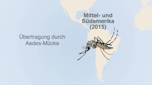 Das müssen Sie über das Zika-Virus wissen