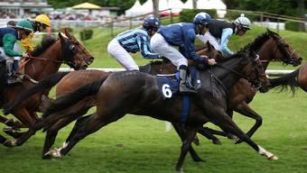 Pferderennsport im Aarauer Schachen