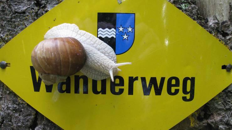 Auch Schnecken lieben die Aargauer Wanderwege. (Distelberg, Aarau)