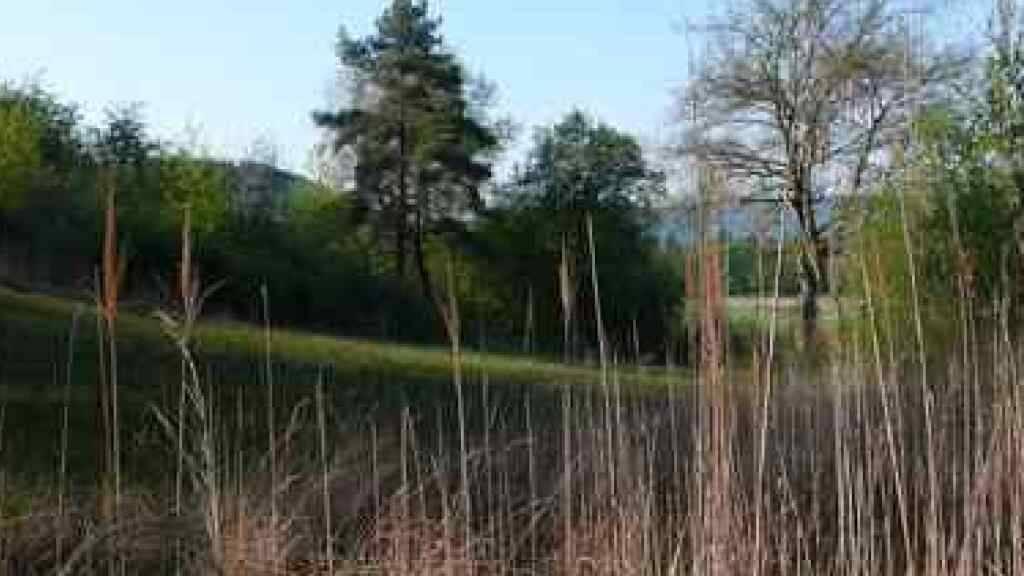 Das Ramser Moos an der Westflanke des Schienerbergs ist das wertvollste Moor im Kanton Schaffhausen.