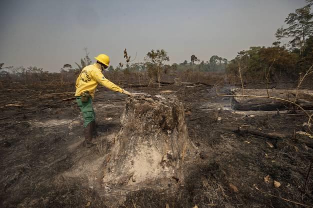 Bedroht: Die Bürger sollen sich den Regenwald zurückholen, forderte Bolsonaro.