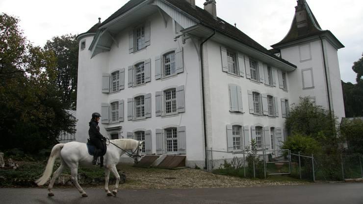 Reitparadies entlang dem Köngshof