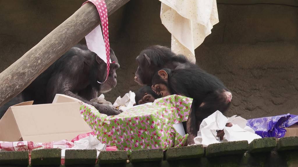 Tierische Weihnachten: Trotz Besuchsverbot gibt es Geschenke