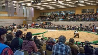 Beim Niklausschwinget vor einem Jahr fanden sich in der Stadthalle Dietikon zahlreiche Fans ein, um dem traditionellen Hallenschwingfest beizuwohnen.