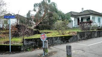 Die Spuren des Sturms Burglind: Umgestürzte Bäume in Aarauer Gärten