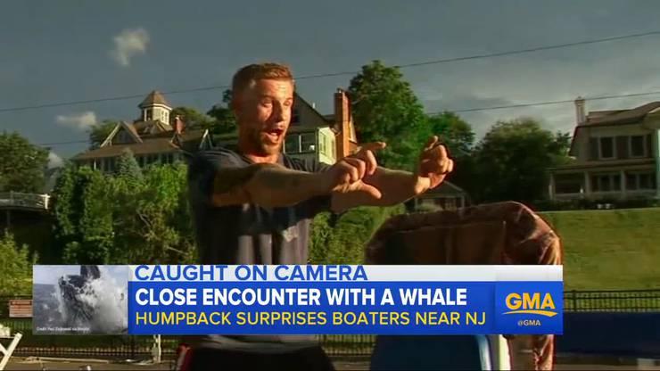 Noch immer sichtlich bewegt schildert Paul Ziolkowski bei «Good Morning America», wie er den Buckelwal gefilmt hat (Video oben).