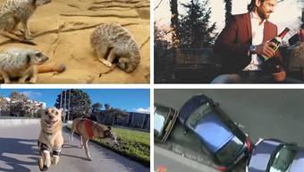 Tierisch witzig und hundemässig schön: Die Videos der Woche.