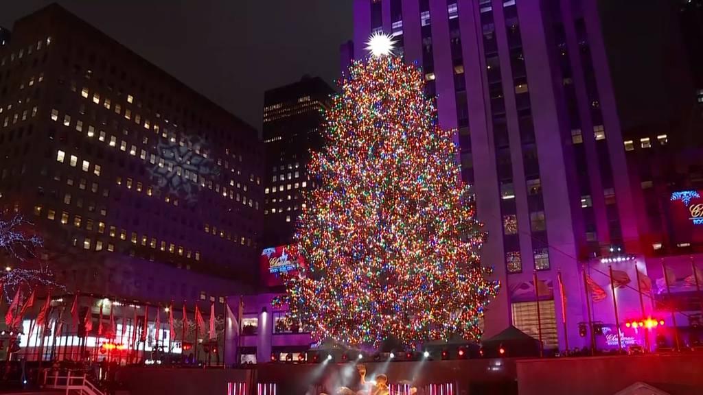23 Meter hoher Weihnachtsbaum