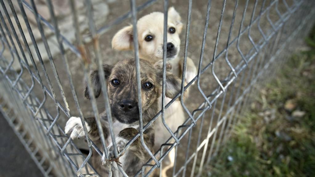 Hunde hinter Gitter