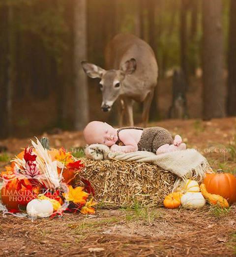 Baby-Fotoshooting im Wald – und plötzlich kommt ein Reh