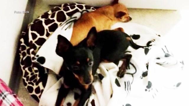 Hundemörder von Aarburg akzeptiert Strafe