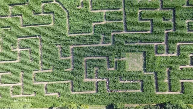 Verirren erwünscht: Eröffnungstag des Wettinger Maislabyrinths