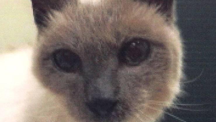 Kater Scooter - laut Guinness-Buch der Rekorde die älteste Katze der Welt - führt in Texas ein geruhsames Leben.
