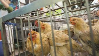 In China bricht in einer Hühnerzucht die Vogelgrippe aus (Archiv).