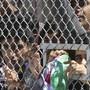 Kinder am Zaun des Flüchtlingscamps Moria auf der griechischen Insel Leybos. (Archiv)