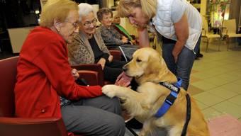 Hunde im Alterszentrum Weinberg