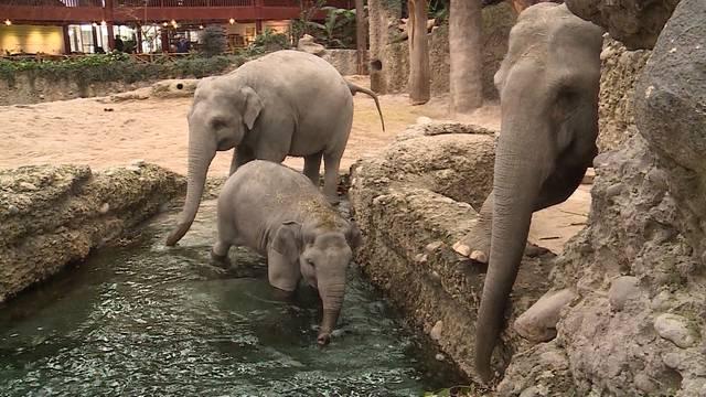 Traumberuf Zoo-Tierpfleger — Zootiere im Winter