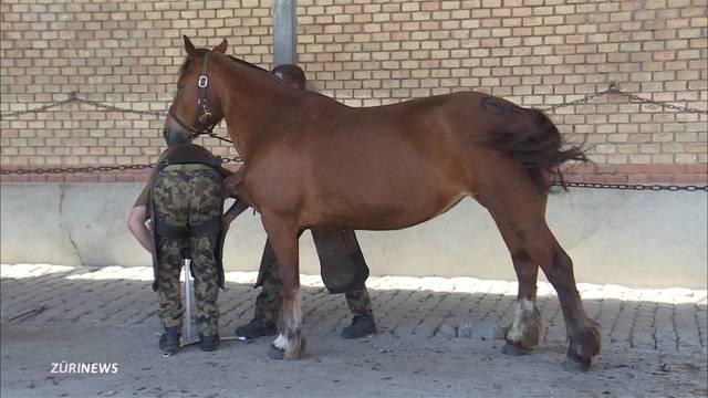 Pferde von Tierquäler Ulrich K.. sollen versteigert werden
