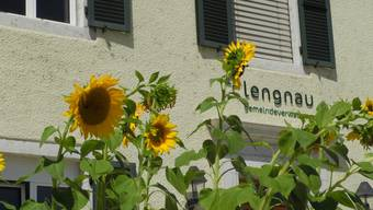 Sonnenblumen Grenchen