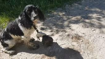 Unglaublich: Trotz den schweren Metallteilen um seinen Hals hat sich dieser Hund aus den tödlichen Fluten gerettet.
