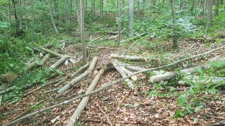Eine bearbeitete Waldparzelle.
