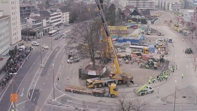Drohnenvideo Baumversetzung Rotbuche Schlieren