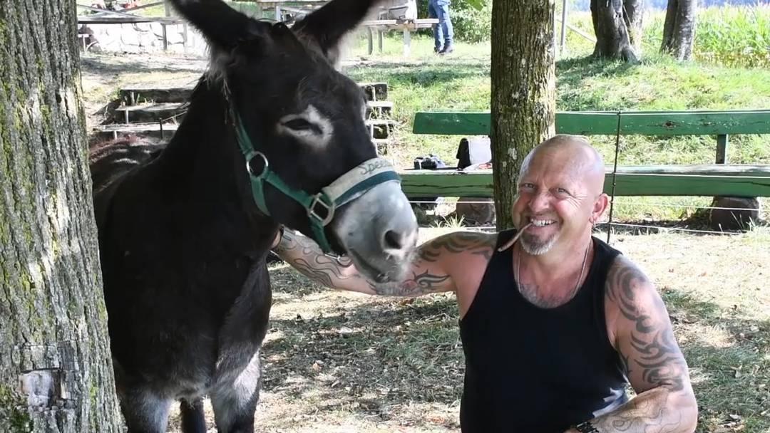 «Zwei Esel haben sich gefunden»: Die Büetzer Buebe und Radio Argovia auf Tuchfühlung mit Esel Speedy