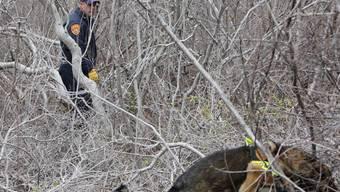 Polizist und Leichenspürhund auf Long Island im Einsatz (Archiv)