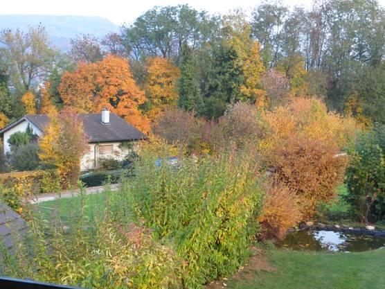 Wetten das, dass wir so schnell nicht wieder so einen farbenprächtigen Herbst erleben werden. Dank dem sonnigen Sommer.