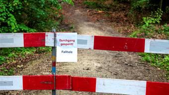 Abgestorbene Bäume im Hardwald können abbrechen und Passanten verletzen.