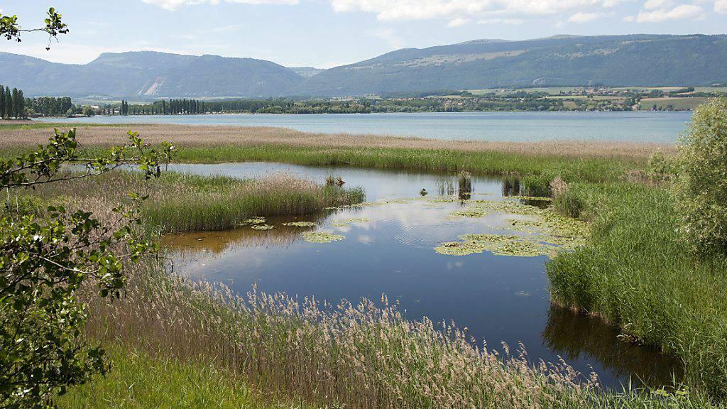 Der Schiessplatz der Luftwaffe befindet sich vor einer geschützten Uferlandschaft am Neuenburgersee, der Grande Cariçaie. (Archivbild)