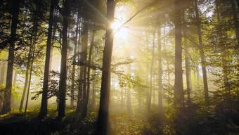 Der Schein trügt: Trotz der Schönheit unserer Wälder sind die Bäume vielen negativen Einflüssen ausgesetzt.