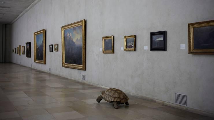 Istvan Balogh lässt eine Schildkröte in «Entschleunigung» ein Museum besuchen.