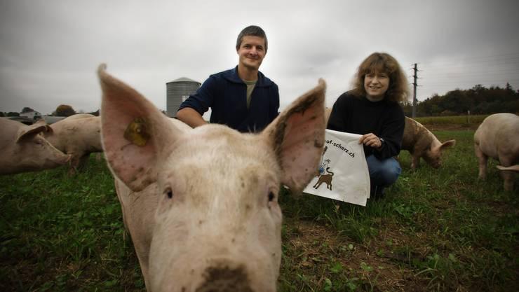 Die Rennschweine von Vogts geniessen den Weidegang. Für einmal tragen sie kein Werbemäntelchen. (Bild: Chris Iseli)