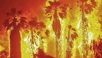 Waldbrand in Kalifornien (Archiv)