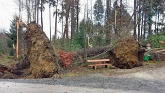 «Burglind»-Schaden im Forst von Schmiedrued.